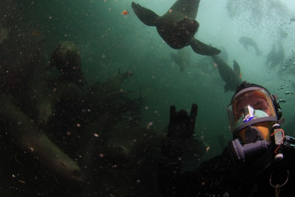 Diver and Sea lion diving around Vancouver Island with Sink or Swim Scuba