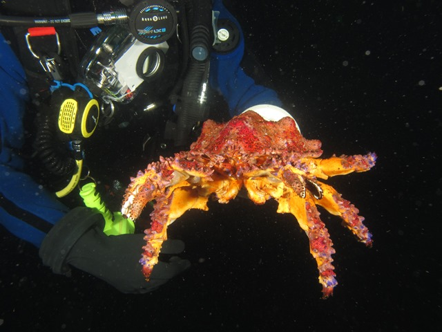 Ray Puget Sound King Crab