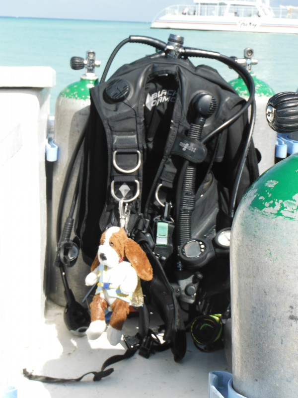 scuba dog in mexico