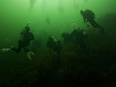 Weekly Drop In Dives Nanaimo