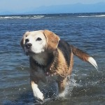 bailey at beach